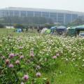 初夏ということもあって会場はお花畑にもなっていました